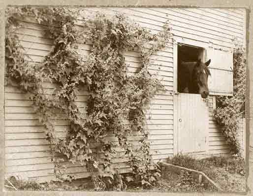 The Willcox old photo of horse